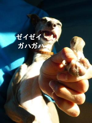2012_0109ナッキー0079