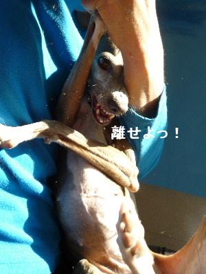 2012_0109ナッキー0056