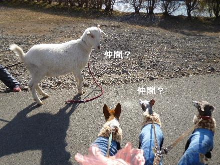 2012_0114ナッキー0053