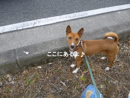 2012_0116ナッキー0027