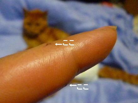 2012_0121ナッキー0038