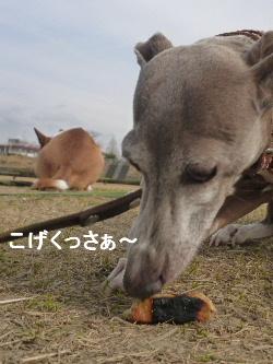 2012_0128ナッキー0022