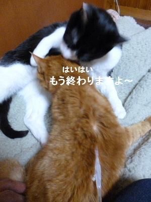 2012_0205ナッキー0011