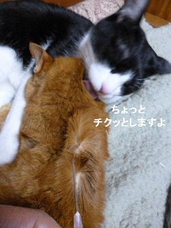 2012_0205ナッキー0008