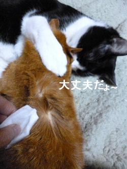 2012_0205ナッキー0006