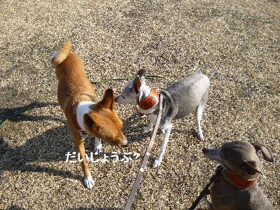 2012_0210ナッキー0026