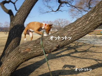 2012_0211ナッキー0002