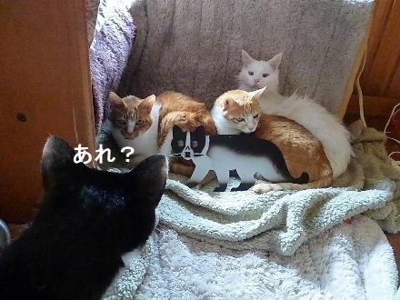 2012_0224ナッキー0014