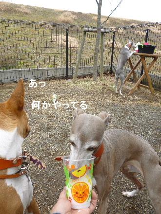 2012_0301ナッキー0040