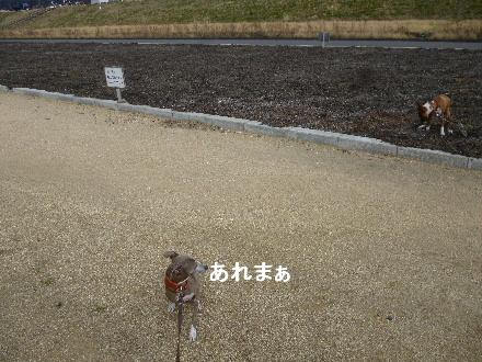 2012_0316ナッキー0027