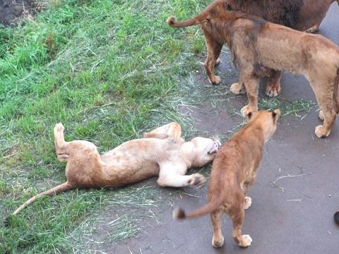 多摩動物園6