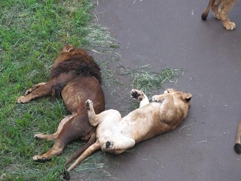 多摩動物園7