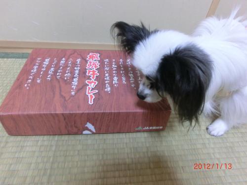 リリー201131小