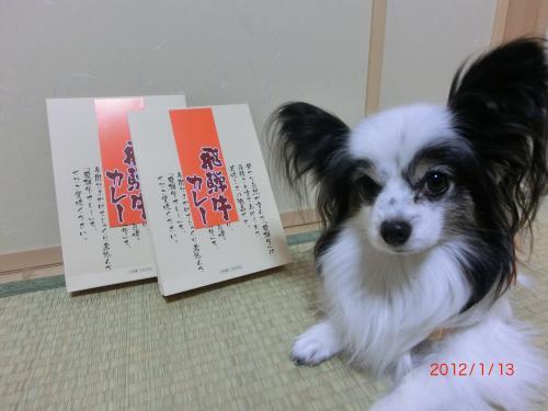 リリー201132小