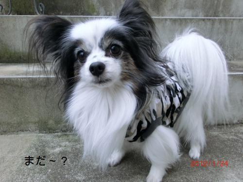 リリー201241小