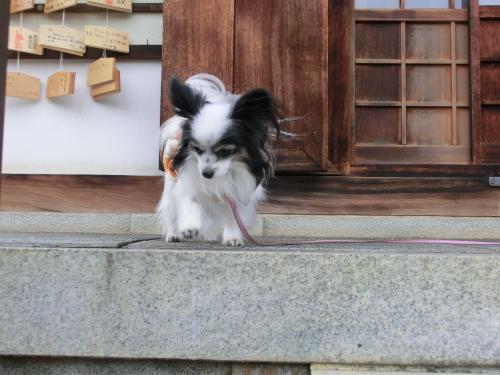 嵐山2012917小