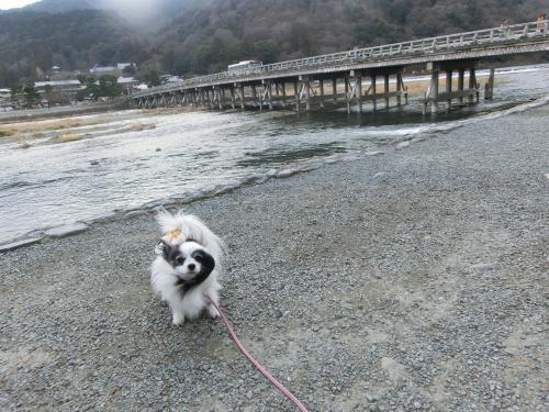 嵐山201296小