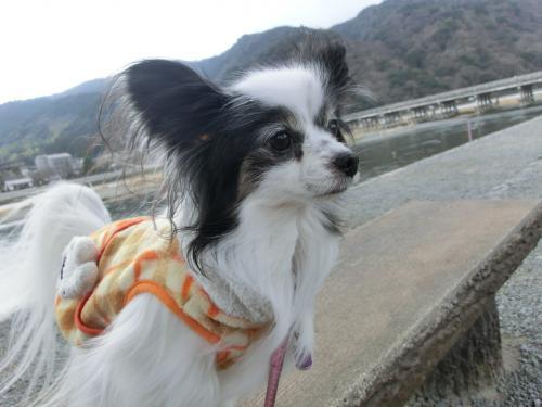 嵐山201293小