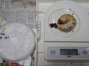 2013川西2番38.7