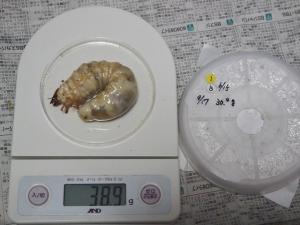 2013川西1番38.9