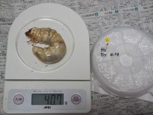 2013川西1番40.7