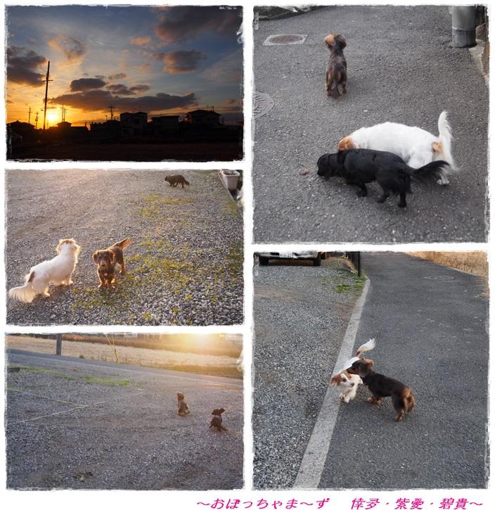 cats 2013.02.09-2