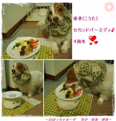 cats 2013.04.06-1