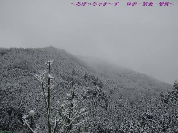 P1140001-1.jpg