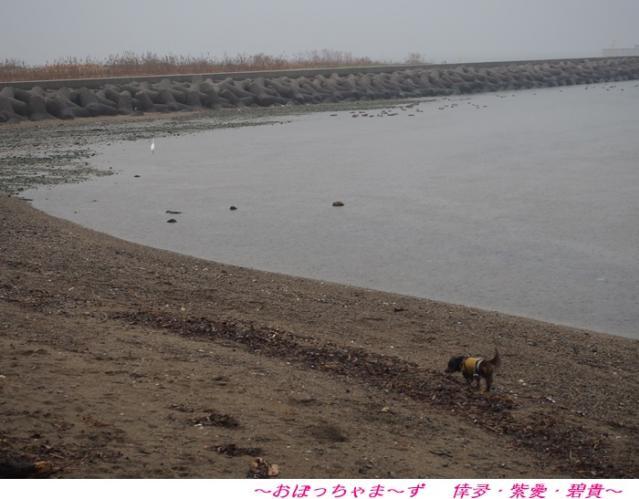 P3200258-1.jpg
