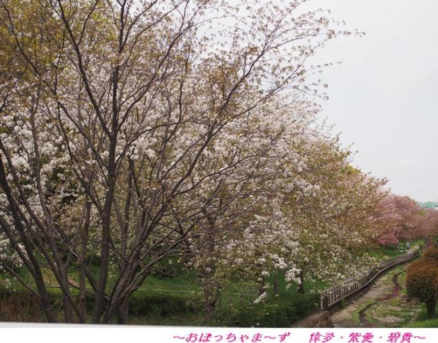 P4100396-1.jpg