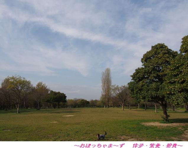 P4100774-1.jpg