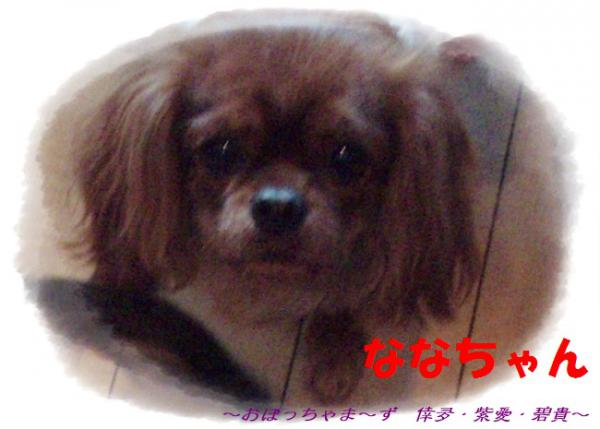 PC240116-1.jpg