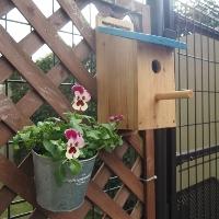 巣箱とパンジー