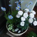丈夫な花を集めて見ました