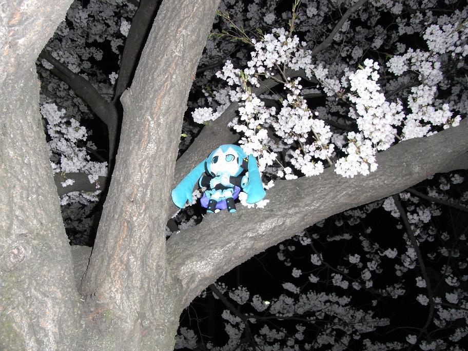桜の樹の上のミクさん