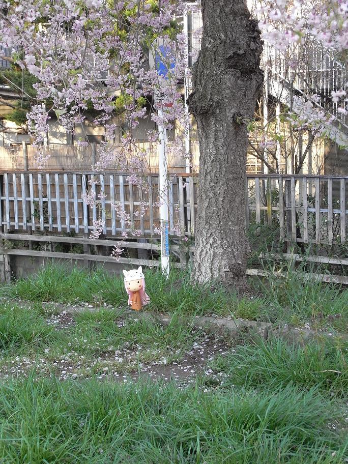 枝垂桜とトエト