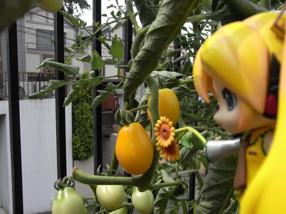トマトいっぱい!