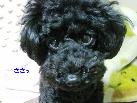 IMG_0405-cocoa_20120215145439.jpg