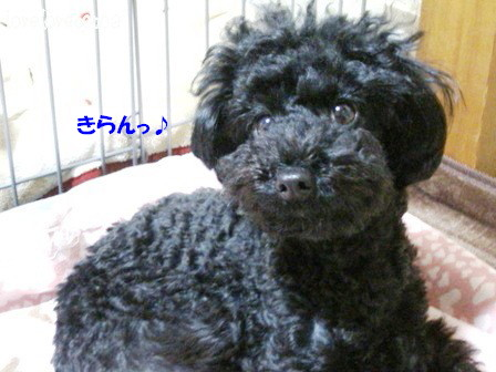 IMG_0432-cocoa_20120215145439.jpg