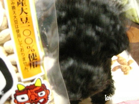 IMG_9858-cocoa_20120203184844.jpg