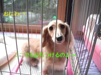 DSCF4498_convert_20111023192439.jpg