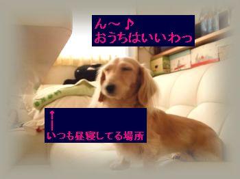 DSCF4505_convert_20111023192720.jpg