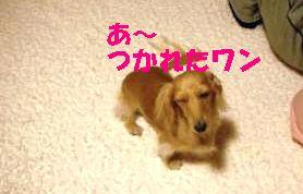 DSCF4547_convert_20111125212253.jpg