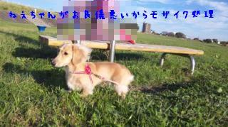 DVC00006_convert_20111108133604.jpg