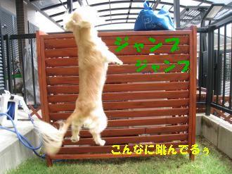 IMG_0965_convert_20110918004157.jpg