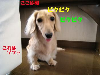 IMG_0998_convert_20110919222418.jpg