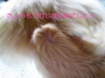 IMG_1028_convert_20110919222606.jpg