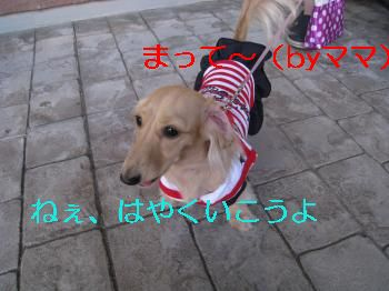 IMG_1165_convert_20111010213931.jpg