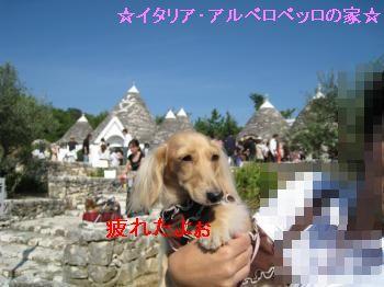 IMG_1214_convert_20111010222342.jpg