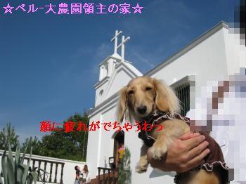 IMG_1236_convert_20111012200332.jpg